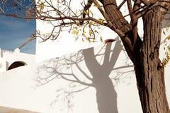 Rua velha com as paredes mediterrâneas brancas com sombras da árvore nela na ilha de Ibiza - imagem fotos de stock