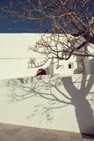 Rua velha com as paredes mediterrâneas brancas com sombras da árvore nela na ilha de Ibiza - imagem foto de stock
