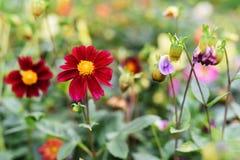 Ruas brilhantes da cidade do close-up da cor das flores imagens de stock