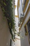 Ruas de Marbella na Espanha com flores e plantas no faca Fotos de Stock Royalty Free