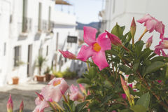 Ruas encantadores em Frigiliana Imagens de Stock Royalty Free