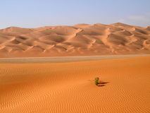 Rub Al Khali 21 Stock Image