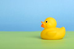 Rub a dub. Yellow rubber duck on green and blue background; copy space; graphic; simple royalty free stock photos