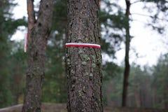 Ruban commémoratif de drapeau de la Pologne image libre de droits
