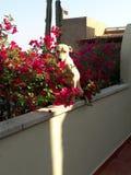 Ruban de recherche de chien de lumière du soleil un matin froid photos stock