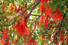 Ruban rouge sur un arbre de souhait en Lianhuashan Lotus Hill, Guangzhou, Chine photos stock