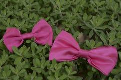 Rubans roses sur des feuilles photo libre de droits