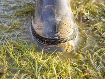 Rubber boot in grass Stock Image