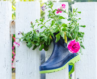 Rubber boot used as flower pot Royalty Free Stock Photos