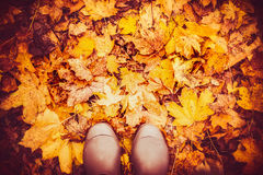 Rubber boots on autumn leaves , top view, fall nature background Stock Images