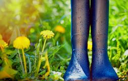 Rubber boots covered with water drops on spring garden background Royalty Free Stock Photos