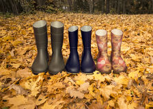 Rubber boots on the fallen leaves Stock Photography