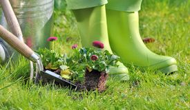 Rubber boots for gardening Royalty Free Stock Photography