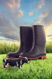Rubber boots in grass with toy cow Royalty Free Stock Images