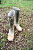 Rubber boots green Stock Photography