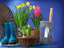 Rubber boots and spring flowers are in a basket Stock Image
