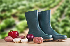 Rubber boots and various vegetable Royalty Free Stock Photos