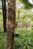 Rubber die in de wildernis onttrekken stock afbeelding