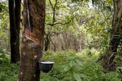 Rubber die in wildernis onttrekken stock foto