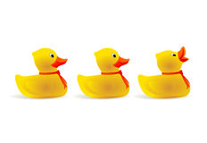 Rubber duck Stock Photography