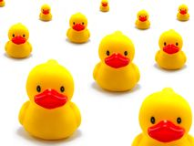 Rubber Duck. A Photo of Rubber Duck royalty free stock photo