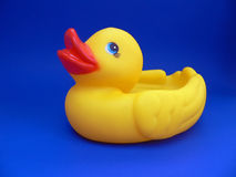 Rubber Duck. On Blue Background Stock Photography