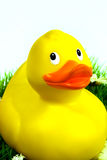 plastic duck Royalty Free Stock Photography