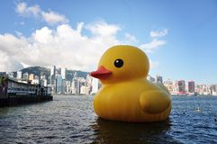 Free Rubber Duck Stock Photography - 31471982