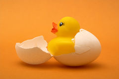 Rubber duck. Just coming out of its egg stock photos