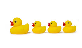 Free Rubber Duck Royalty Free Stock Image - 49293346