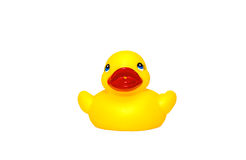 Rubber duck Royalty Free Stock Photos