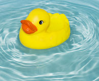 Rubber duck Stock Images