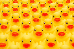 Rubber duck army Stock Images