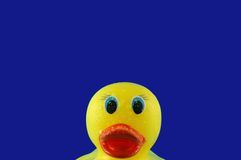 Rubber Duck in Bubbles. Toy rubber duck swimming in soap bubbles on a shiny watery blue background Royalty Free Stock Images
