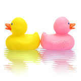 Rubber duck couple Stock Photography