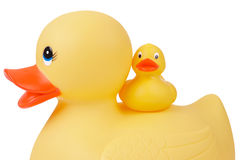 Rubber Duck with Duckling Stock Photography