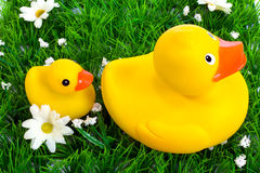 toy duck and duckling Stock Photo
