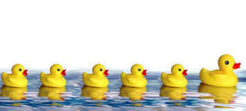 Rubber Duck Family. A family of rubber ducks Stock Photography