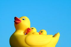 Rubber duck family. With clear blue background royalty free stock images