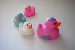 Rubber Duck Family. Pink, White, and blue Rubber Duck Family stock photo