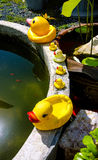 Rubber duck family. Pond edge royalty free stock image