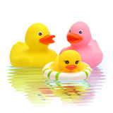 Rubber duck family. On the water stock photography