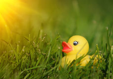 Rubber duck in grass Royalty Free Stock Images