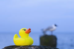 Rubber duck and gull Royalty Free Stock Images