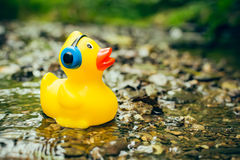 Rubber duck with headphones Stock Photography