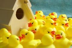 Rubber Duck Homeland Stock Photos