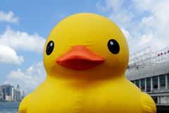 Rubber duck in Hong Kong - Frontview Stock Images