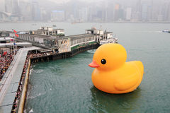 Rubber duck in hong kong Stock Image