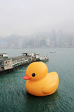 Rubber duck in hong kong Stock Photo