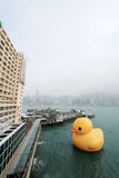 Rubber duck in hong kong Royalty Free Stock Image